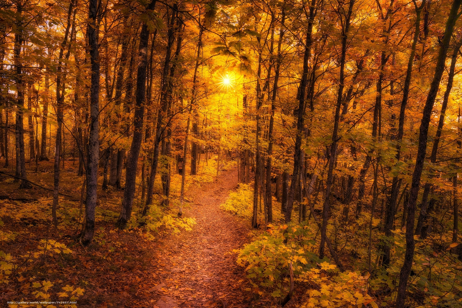 autumn, forest, path, trees, landscape