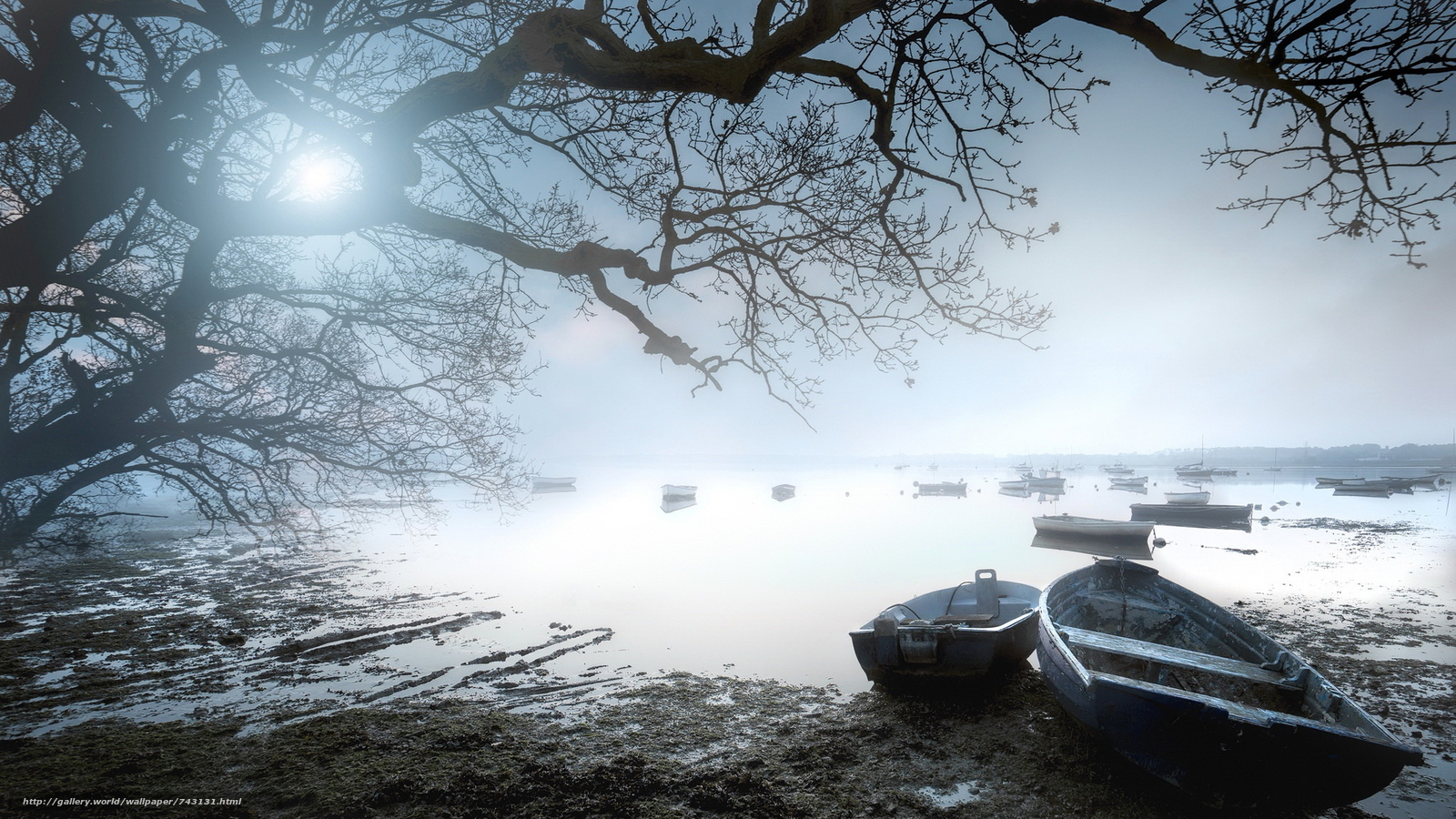 landscape, a boat, boats, water, nature, peace, relaxation, River, lake, dawn, fog, tree, branches, Coast, the sun