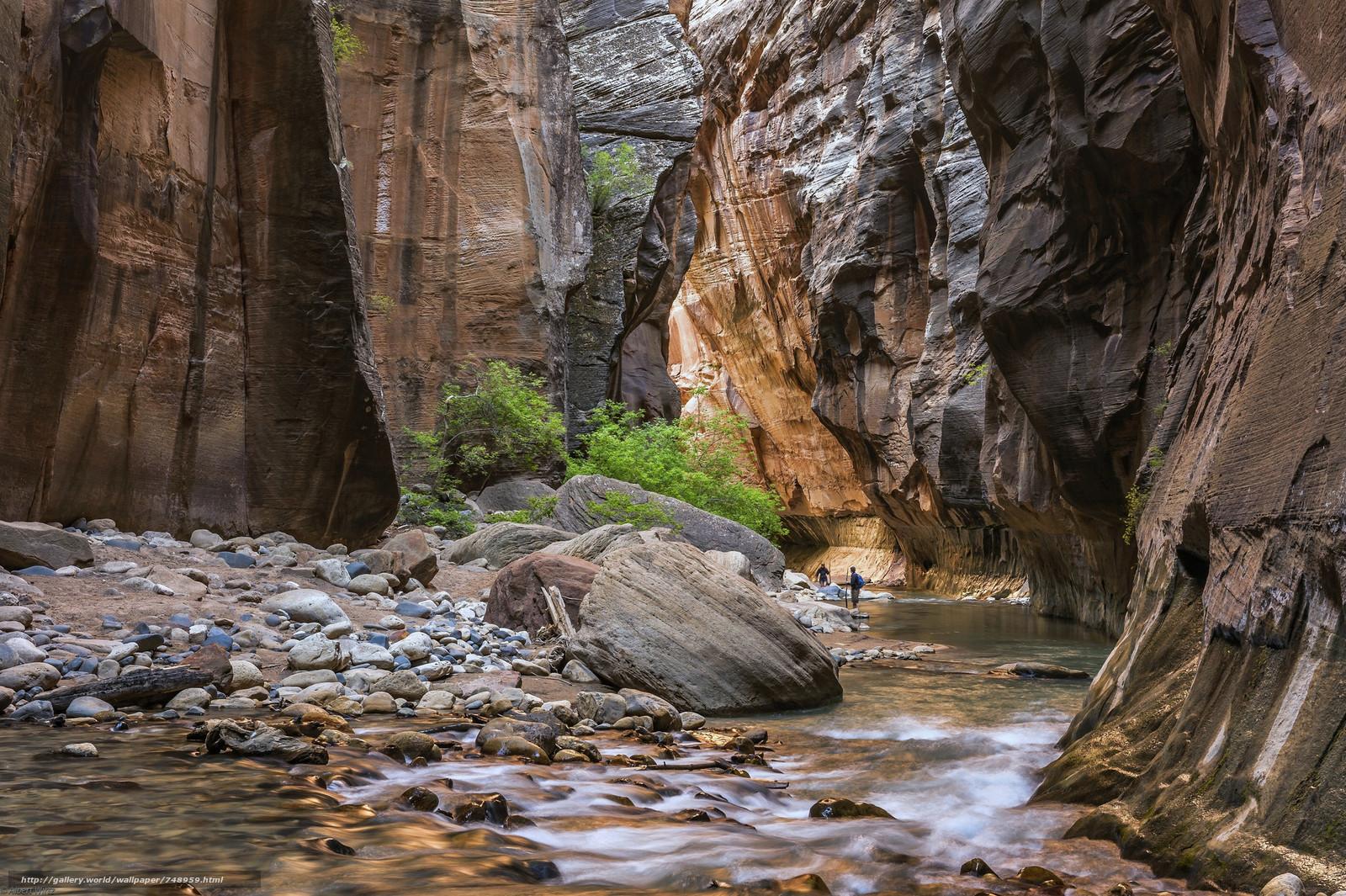 Virgin River, Zion National Park, the mountains, rock, River, landscape