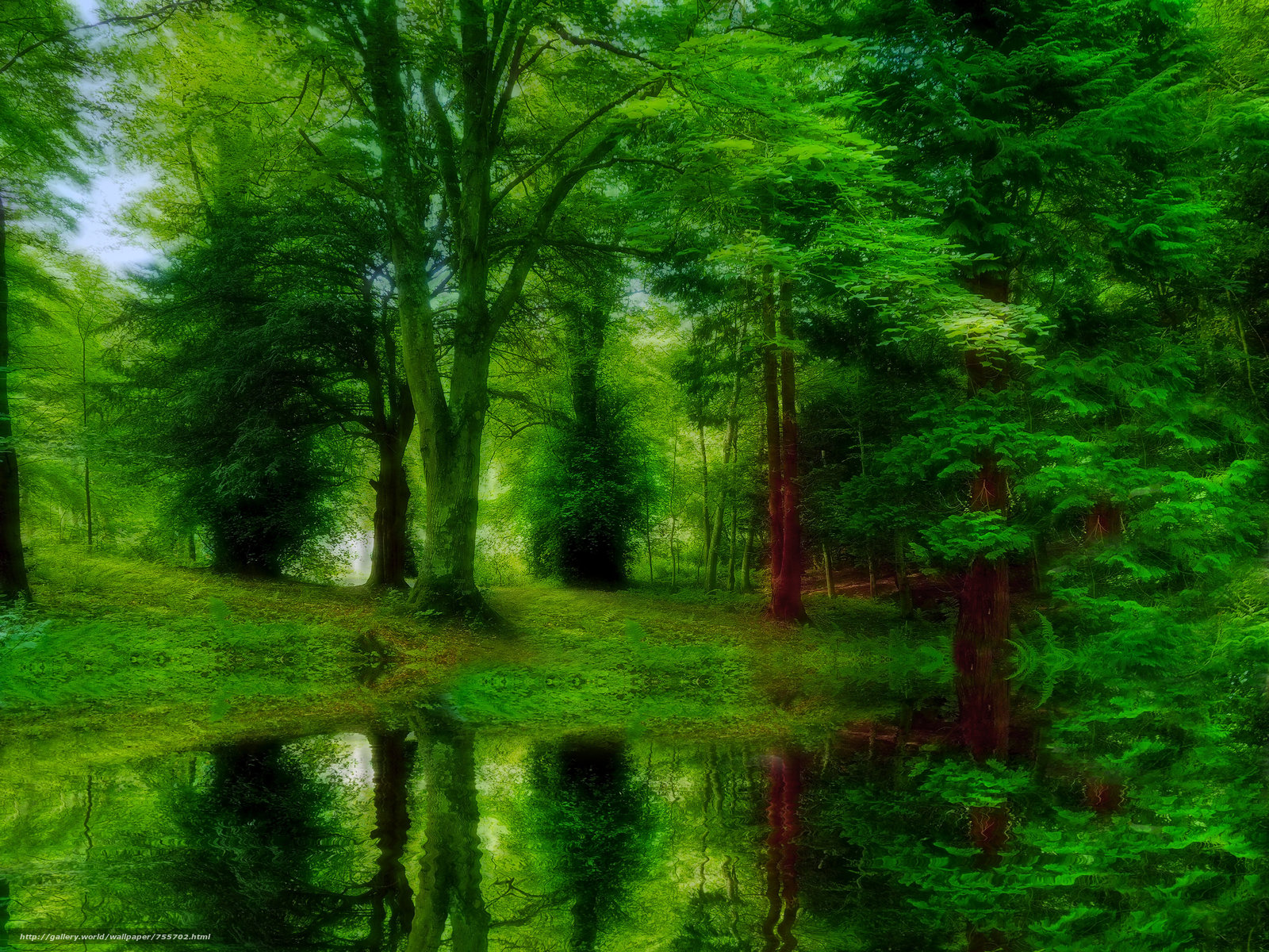 forest, trees, water, nature