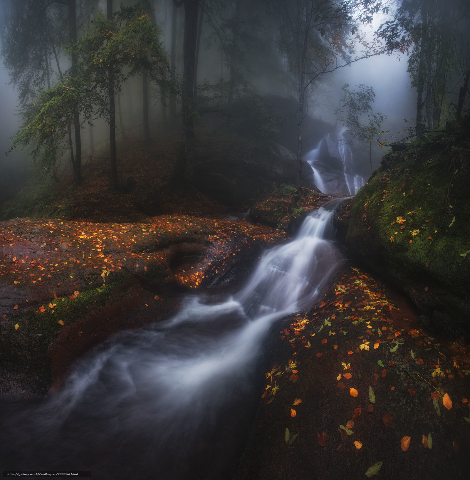autumn, forest, trees, waterfall, fog, nature