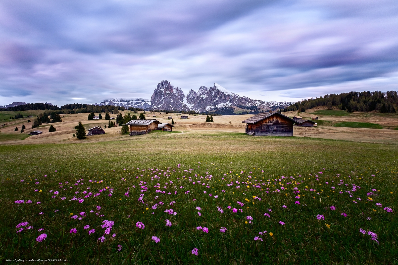 Italy, dolomites, field, the mountains, flowers, at home, landscape