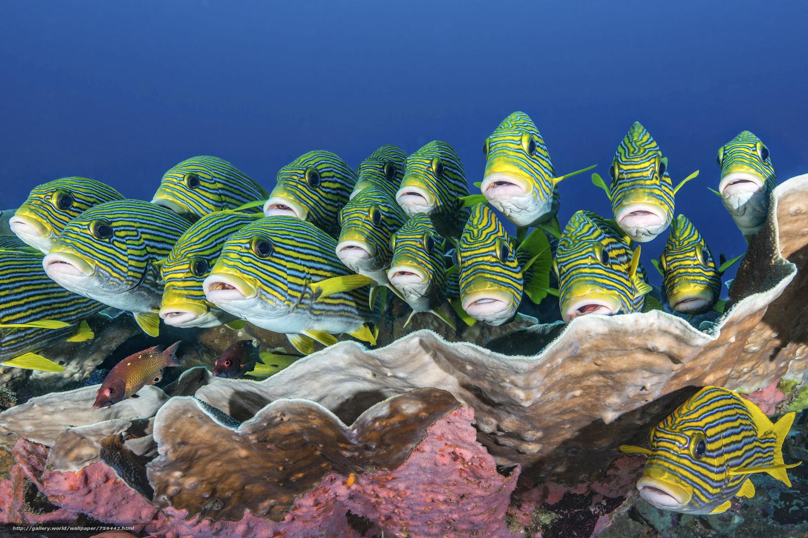 sea, sea bottom, fish, Indonesia, undersea world