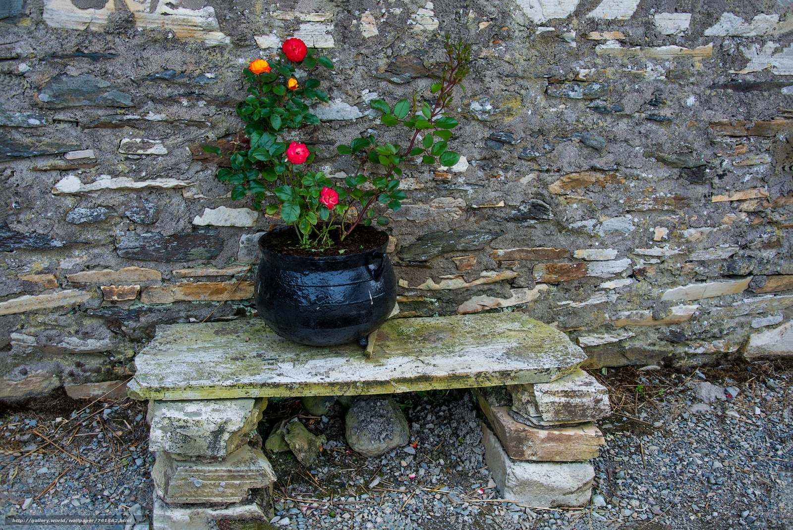 interior, wall, bench, pot, flowers, roses