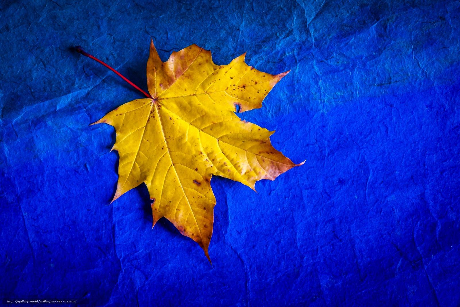 letter, Maple Leaf, autumn leaf
