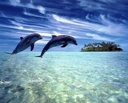 Dolphins, tropics, Island