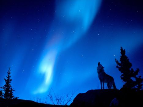night, wolf, radiance, forest
