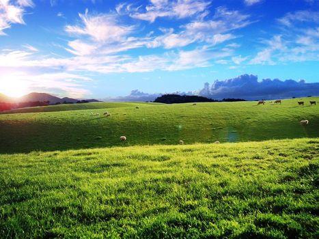 поле, облака, овцы
