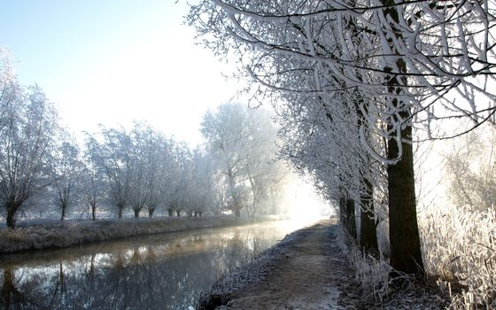 Winter, Fluss, Frost, Bume