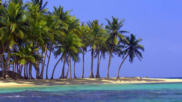 Plaj, nisip, mare, ocean, palmier, tropice, natur
