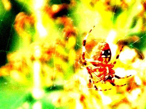 背景, 黄, 蜘蛛, 卷筒纸