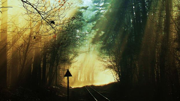 railroad, in autumn, in the forest
