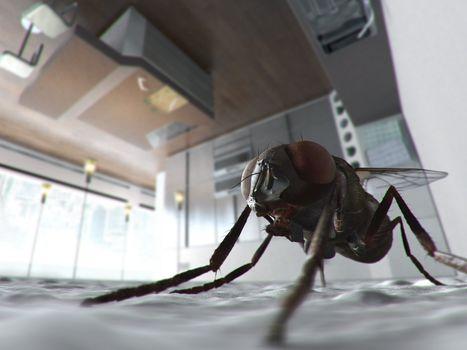муха, кухня, потолок