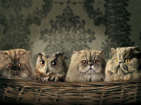 three, Cat, a, owl, four, pair, eye
