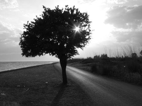 дерево, дорога, черно-белая