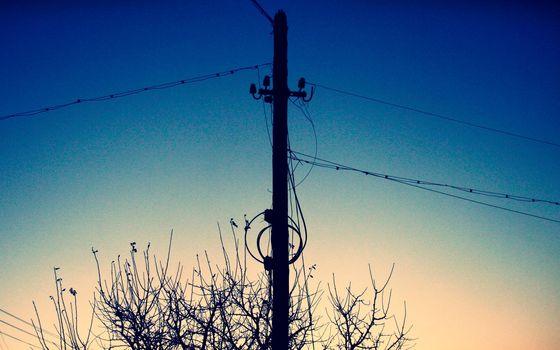 column, sunset, branch, tree, Wire