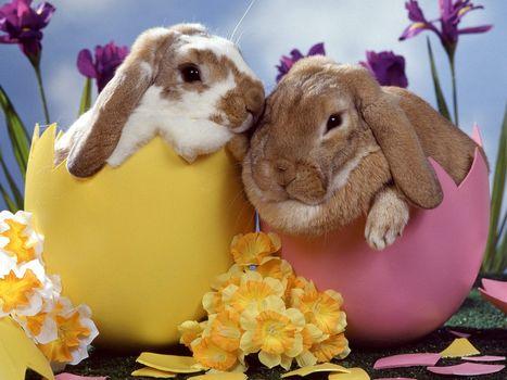 кролики, пасха, цветы, яйца
