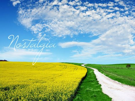 field, road, yellow, greens, sky