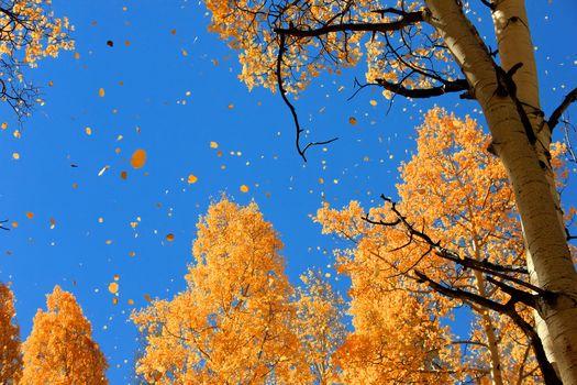 nature, autumn, sky, foliage