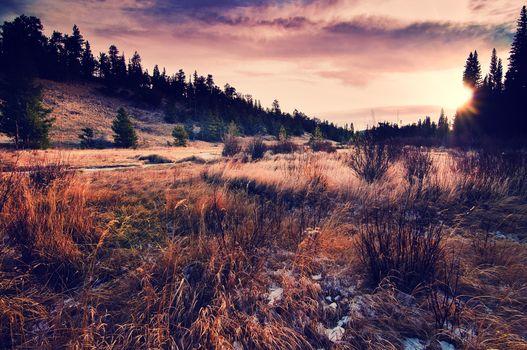 grass, landscape, sky, nature, sun