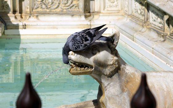 pigeon, water, sculpture, fountain