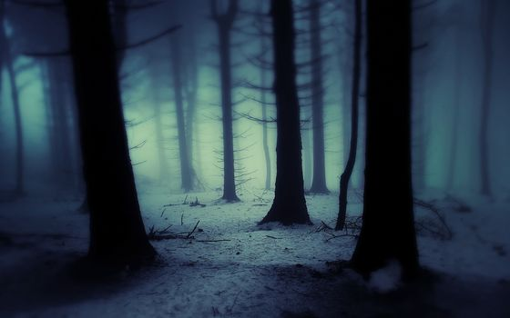 Янек - sedl, ландшафтов, dark forest, janek-sedlar, landscapes, темный лес