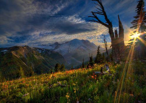 mount rainier national park, sunset, Mountains, Flowers, landscape