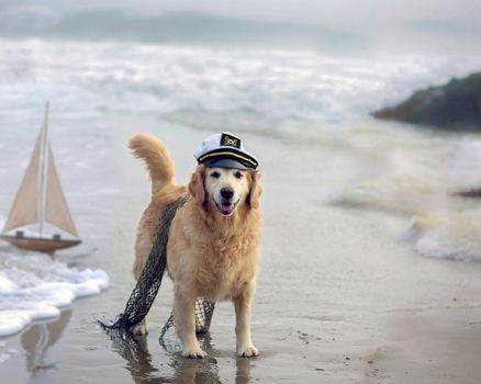 dog, cap, network, sea, ship, dogs, playful, puppy, face, bubbles, cute, beautiful, animals, puppies, playful dog, pretty, sweet, dog face, beauty, pay
