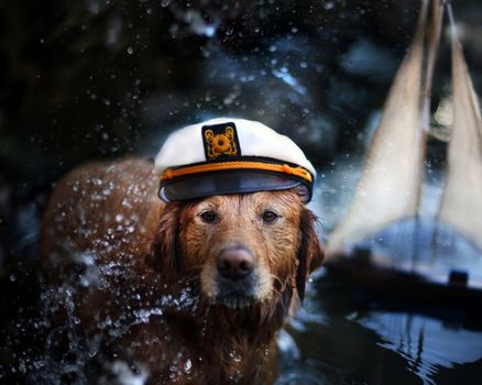 dog, cap, spray, water, dogs, playful, puppy, bubbles, face, beautiful, cute, animals, puppies, playful dog, pretty, sweet, dog face, pay, beauty