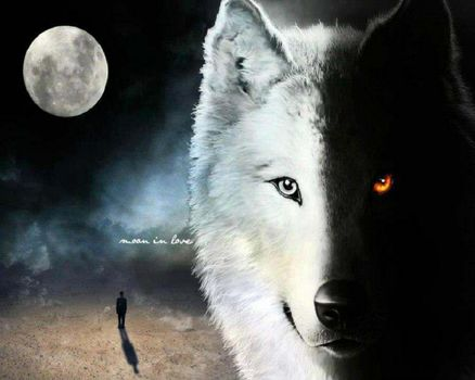 moon, night, wolf, fog, moon, fantasy, abstract, man, wolf, animal