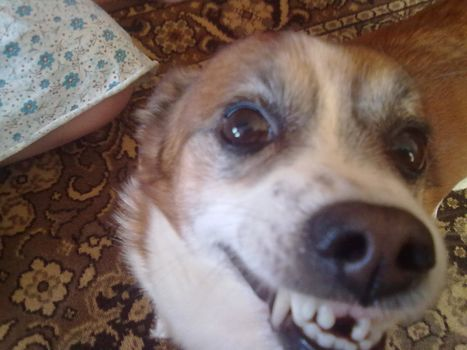 crazy, dog, without teeth