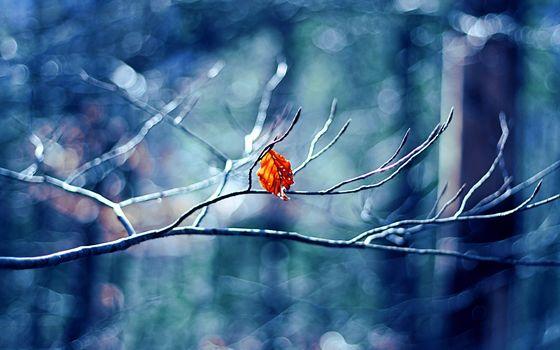 branch, list, macro