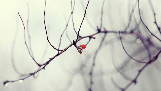 drop, tree, list, autumn, branch