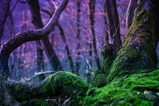 forest, nature, tree, trees, magic, moss