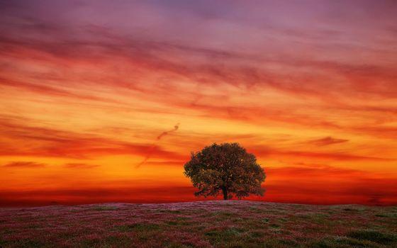 поле, дерево, пейзаж