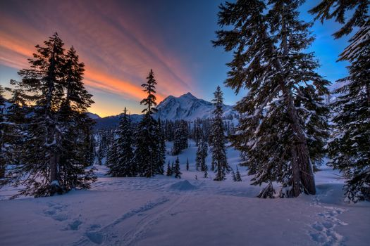 sunrise, mt. Baker, trees, Washington, USA