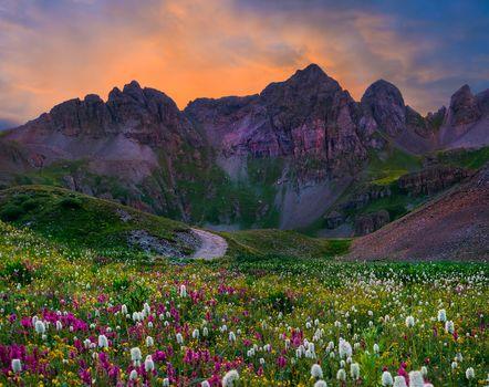 wildflower, sunrise, rockies, Colorado, USA