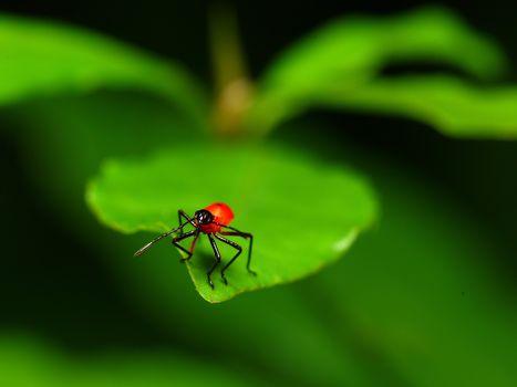 Macro, feuille, insecte