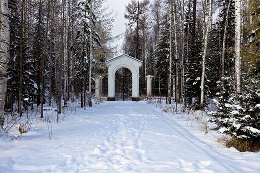 winter, park, trees, landscape