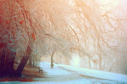 winter, snow, trees, leaves, park, Hill, branch