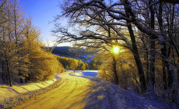 morning, Sun, forest, road, Village