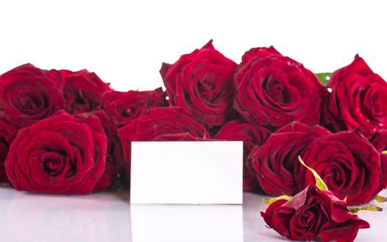 natură, flori, Floare, roșu, catifea, trandafiri, trandafir