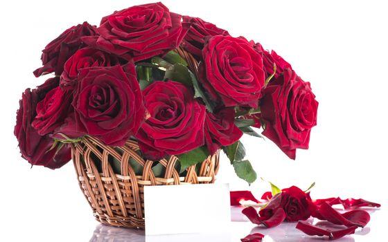 nature, flowers, Flower, red, velvet, roses, rose, basket, bouquet