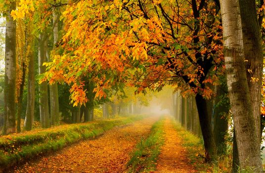 park, trees, colorful, leaves, path, nature, road, forest, autumn