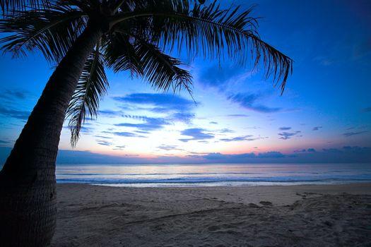 cloudy sky, weeping palm tree, tropical sunset, Caribbean, ocean