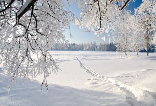 winter, weeping tree, landscape, ice, nature