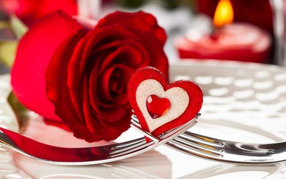 flori, Floare, fericit, Sfântul Valentin, zi, roșu, trandafir, cardiac