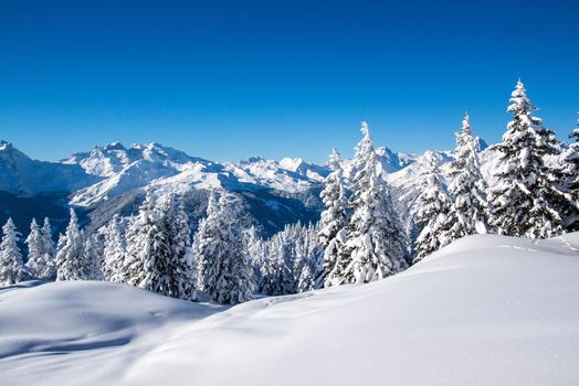 nature, winter, snow, white, trees, snowy, blue, sky, forest