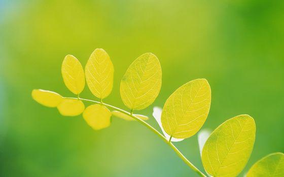 list, branch, greens, light