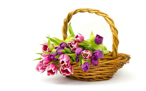 charakter, kwiaty, Kwiat, koszyk, Tulipany